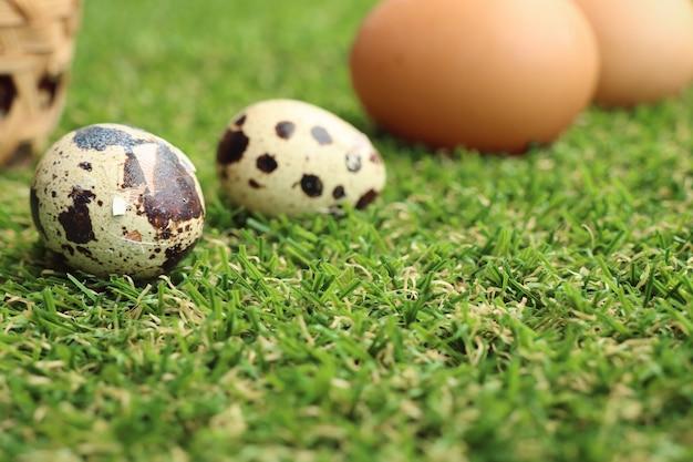 Ovos de codorna na grama artificial