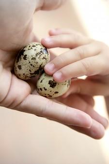 Ovos de codorna na mão da mãe, crianças segurando