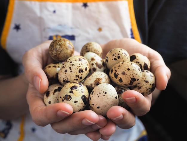 Ovos de codorna nas mãos, close-up.