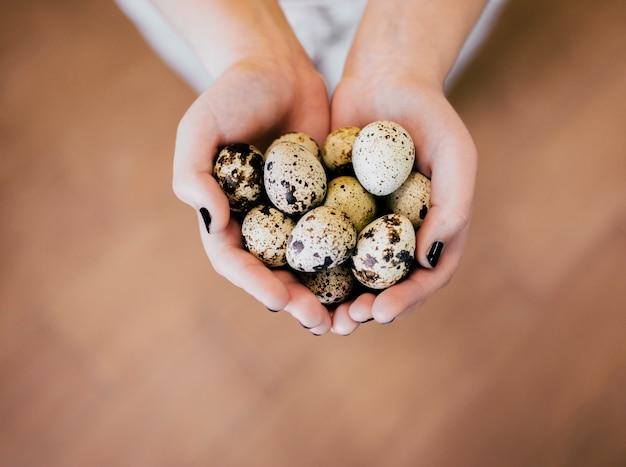 Ovos de codorna nas mãos da menina