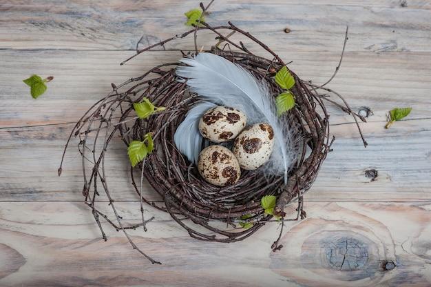 Ovos de codorna no ninho de galhos de bétula e penas azuis na mesa de madeira
