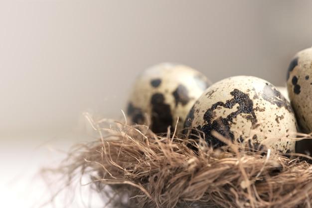 Ovos de codorna no ninho de palha na luz pastel