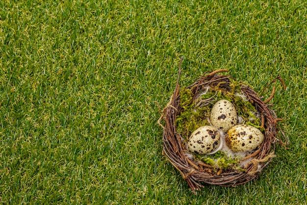 Ovos de codorna no ninho de um pássaro na grama verde ensolarada fresca