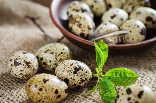Ovos de codorna orgânicos frescos e folhagem de primavera.