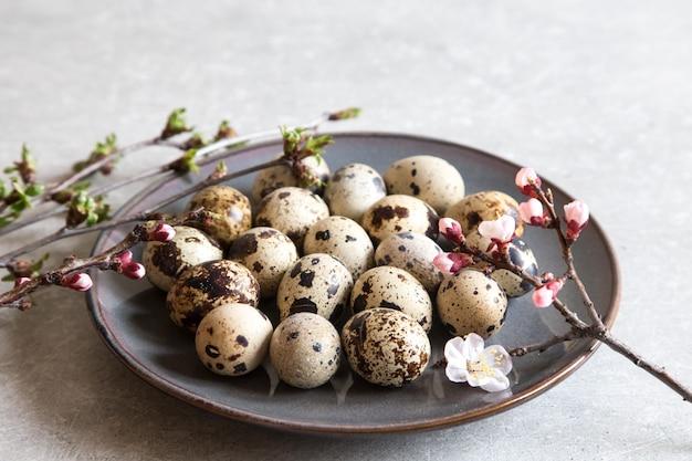 Ovos de codorniz frescos orgânicos naturais. dieta de proteína.
