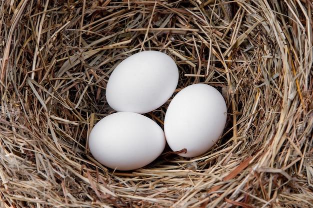 Ovos de galinha branca em um ninho de palha