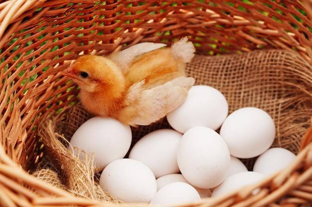 Ovos de galinha branca rústica orgânica closeup em pano natural em uma cesta e amarelo pequeno frango org.
