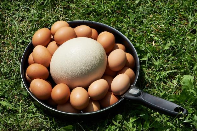 Ovos de galinha e ovo de avestruz na panela