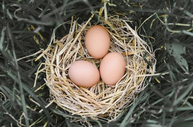 Ovos de galinha fresca no ninho de palha no chão com grama de ovo de cesta de feno