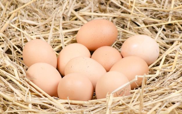 Ovos de galinha marrom em um ninho de palha