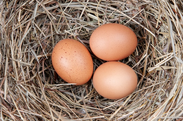 Ovos de galinha marrons em um ninho de palha