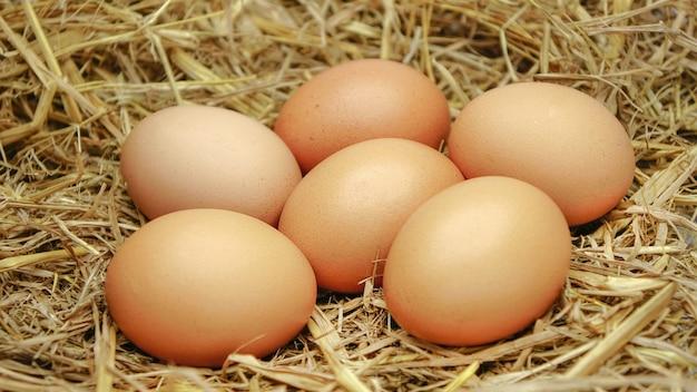 Ovos de galinha orgânicos com presas
