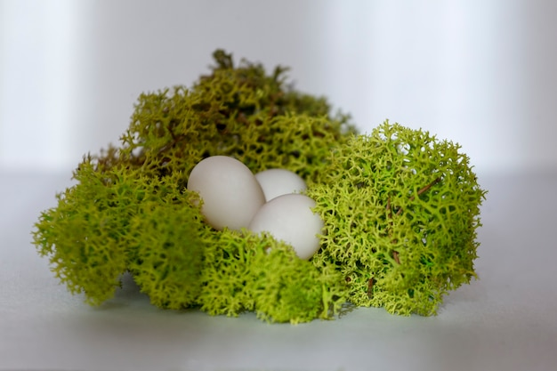 Ovos de papagaio repousam em um ninho de musgo