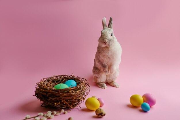 Ovos de páscoa coloridos e coelho na mesa-de-rosa.