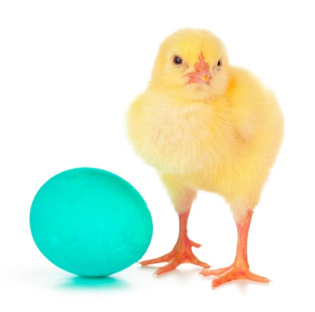 Ovos de páscoa coloridos e frango pequeno bonito isolado no branco