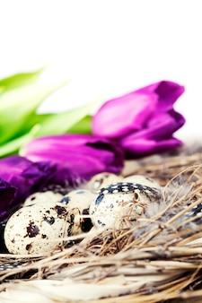 Ovos de páscoa com flores de tulipa roxa
