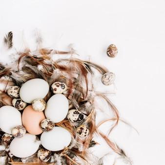 Ovos de páscoa marrons e brancos, ovos de codorna em um ninho decorado com penas na superfície branca