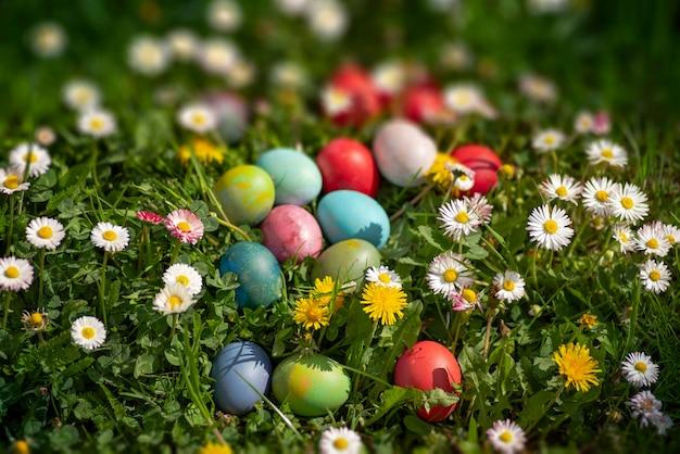 Ovos de páscoa multicoloridos na grama verde, entre margaridas e dentes-de-leão sob o sol forte