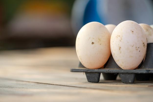 Ovos de pato grande de agricultores criando patos em um sistema de fazenda aberta