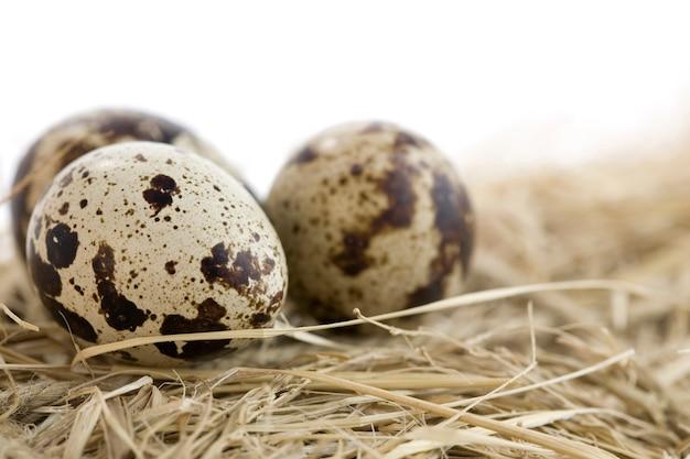 Ovos deitados no feno