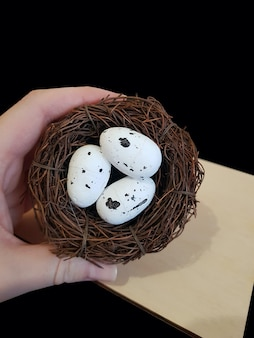 Ovos em um ninho de galhos em um fundo preto isolado