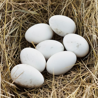 Ovos frescos orgânicos na fazenda de galinhas