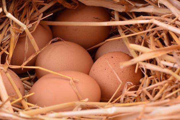 Ovos frescos