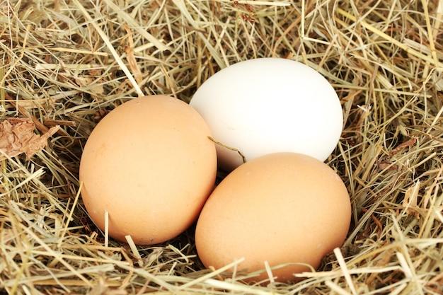 Ovos marrons e brancos em um ninho de feno close-up