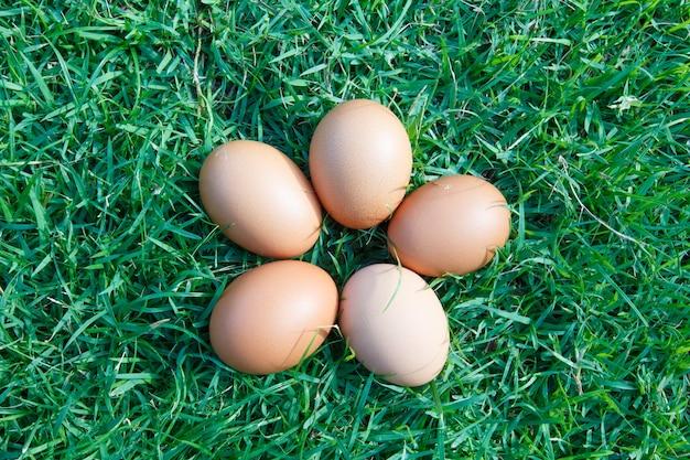 Ovos na grama verde