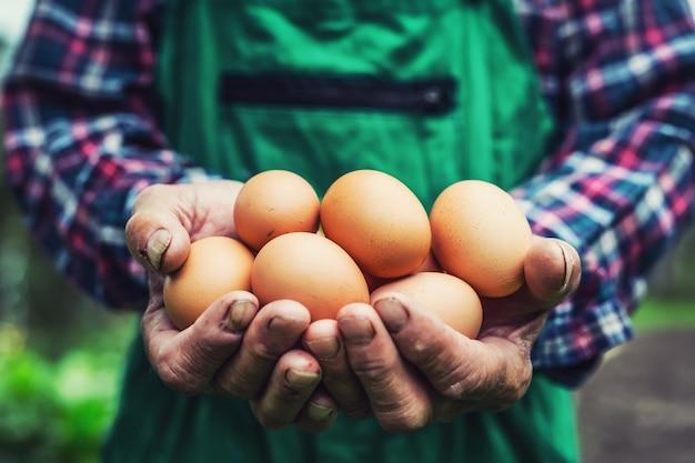 Ovos nas mãos. perto do velho fazendeiro hábil segurando ovos de galinha.