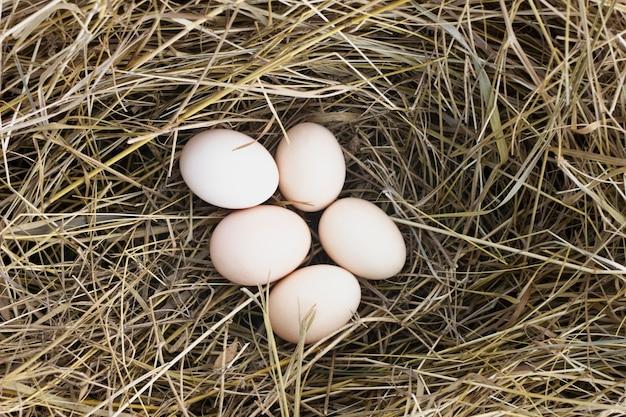 Ovos no feno na fazenda de galinhas