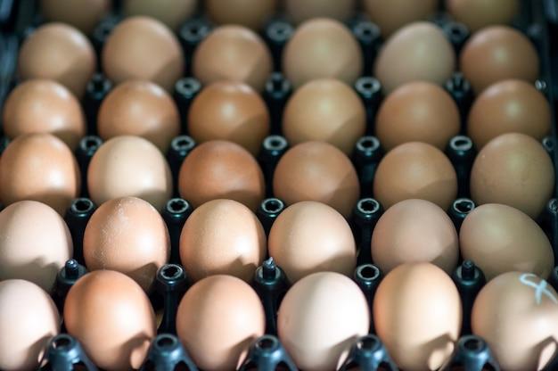 Ovos no pacote de papel
