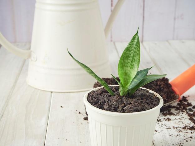 Pá de jardim e solo em uma mesa de madeira branca