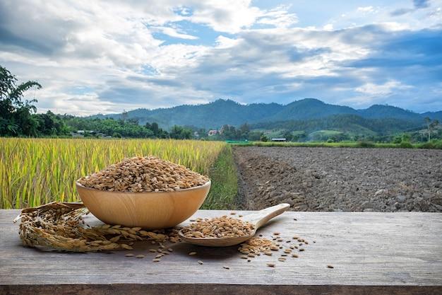Paddy em tigela de madeira e colher de pau com o fundo do campo de arroz