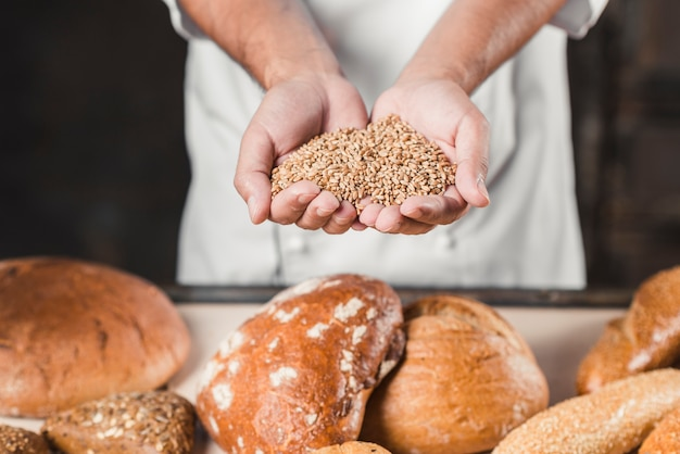 Padeiro, segurando, trigo, grãos, em, mãos, frente, pão assado