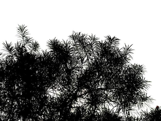Padrão abstrato, silhuetas de folhas