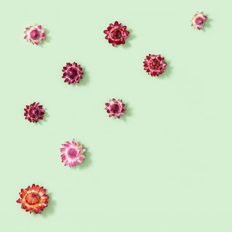 Padrão com botão de close-up de flores decotrativas secas, pequenas flores em verde. fundo florido natural