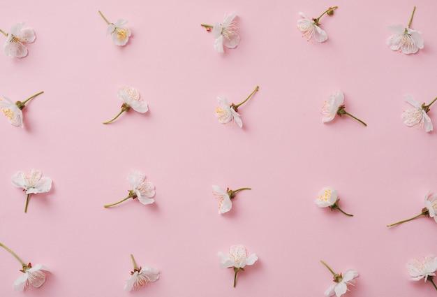 Padrão com flor de cereja doce em um fundo rosa. molas e flores e conceito moderno mínimo.