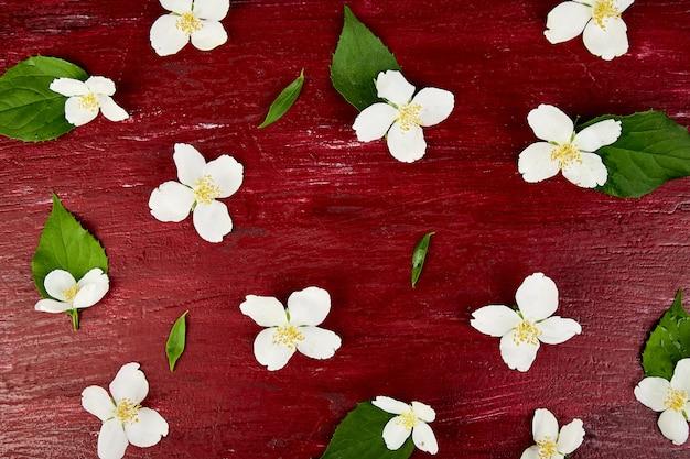 Padrão com flores de jasmim