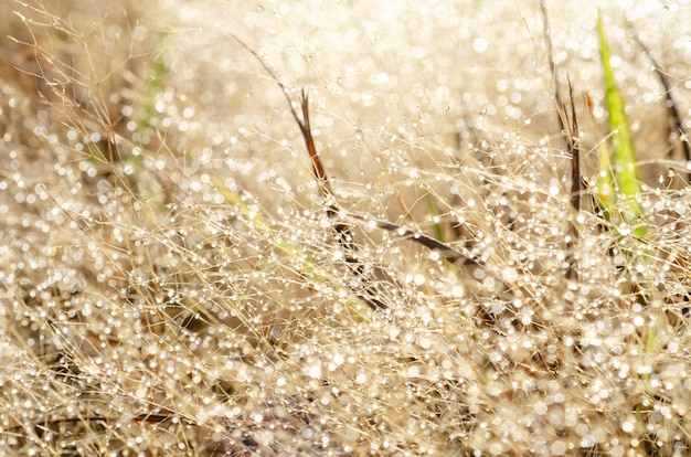 Padrão de bokeh e gotas de água na grama turva