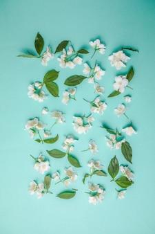 Padrão de botão de jasmim e folhas espalhadas em um fundo verde vista aérea camada plana