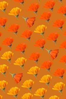 Padrão de calêndula em vaso de flores laranja
