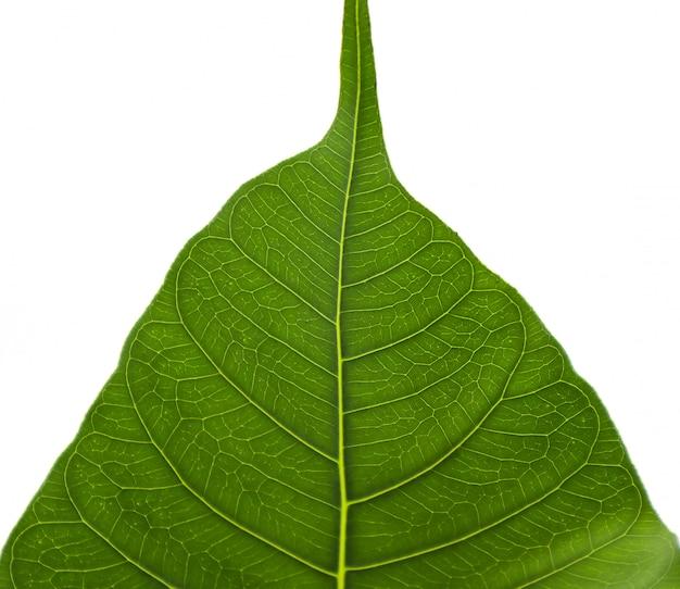 Padrão de fibra nas folhas
