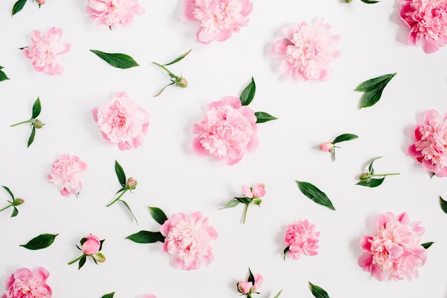 Padrão de flor de flores de peônia rosa, galhos, folhas e pétalas em branco