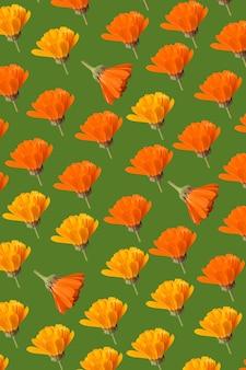 Padrão de flores de calêndula com fundo verde
