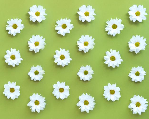 Padrão de flores de margarida branca em fundo verde