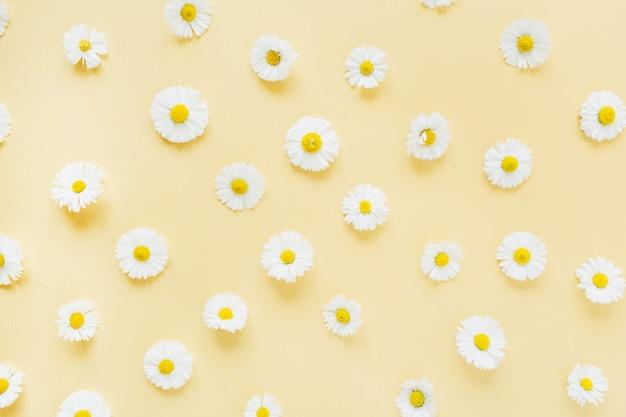 Padrão de flores de margarida de camomila branca em amarelo