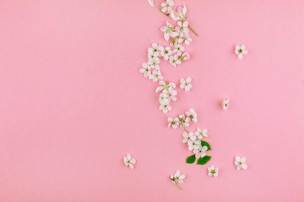 Padrão de flores desabrochando árvore de cereja branca primavera