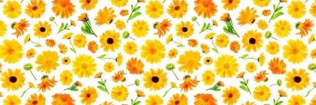 Padrão de flores laranja de calêndula em um fundo branco, como pano de fundo ou textura. primavera, papel de parede de verão para seu projeto. banner de superfície plana de vista superior.