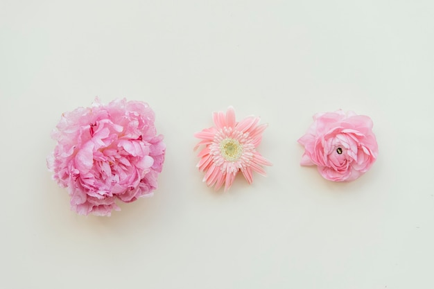 Padrão de flores rosa frescas em fundo branco